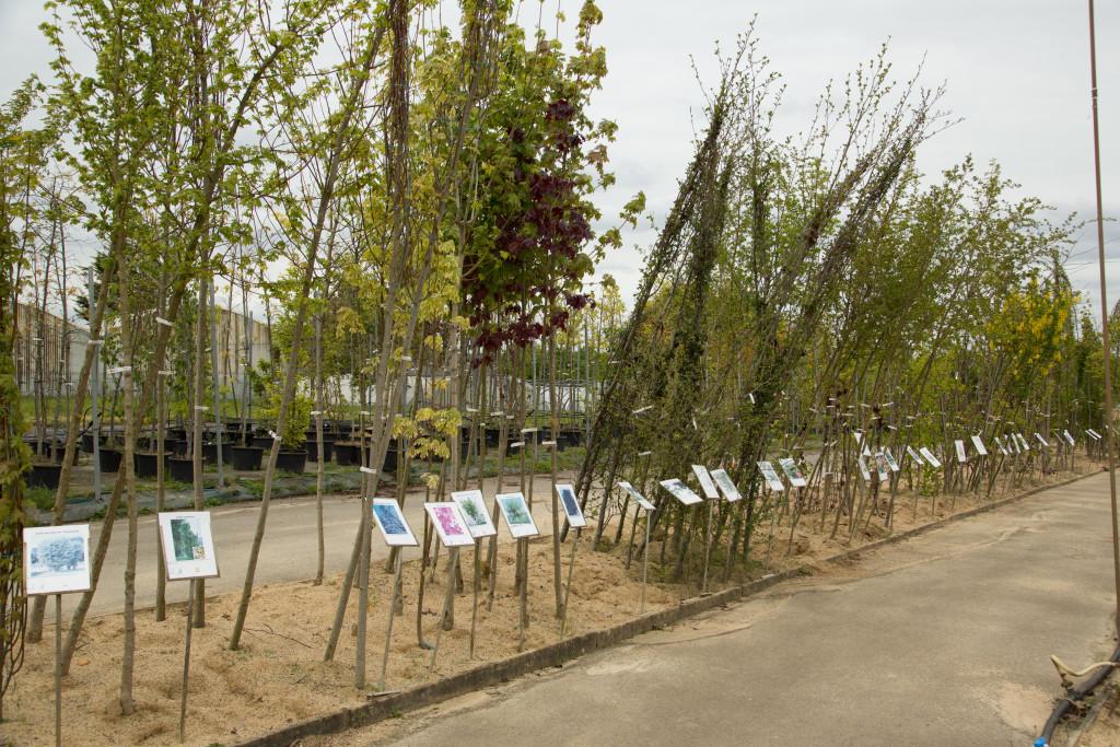 arbres d'ornements