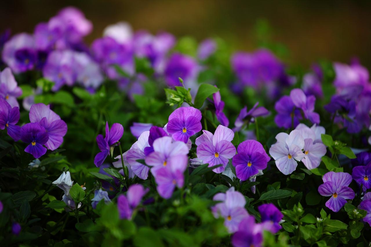 flowers-1492757_1280