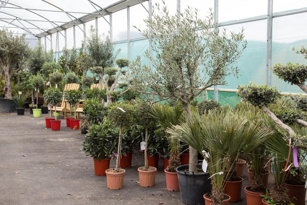 plantes mediterraneenne