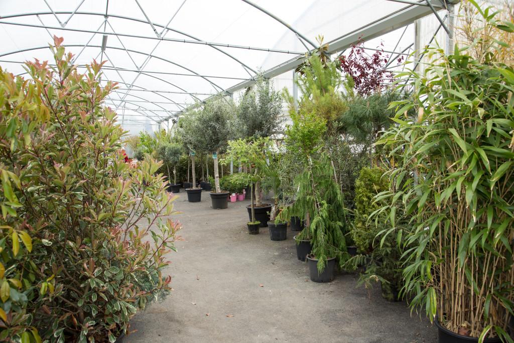 plantes mediterraneennes