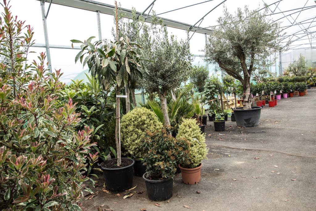 plantes mediterraneennes (2)