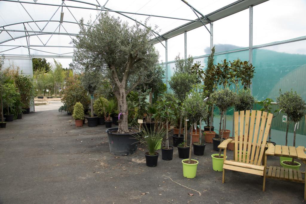 plantes mediterraneennes (3)