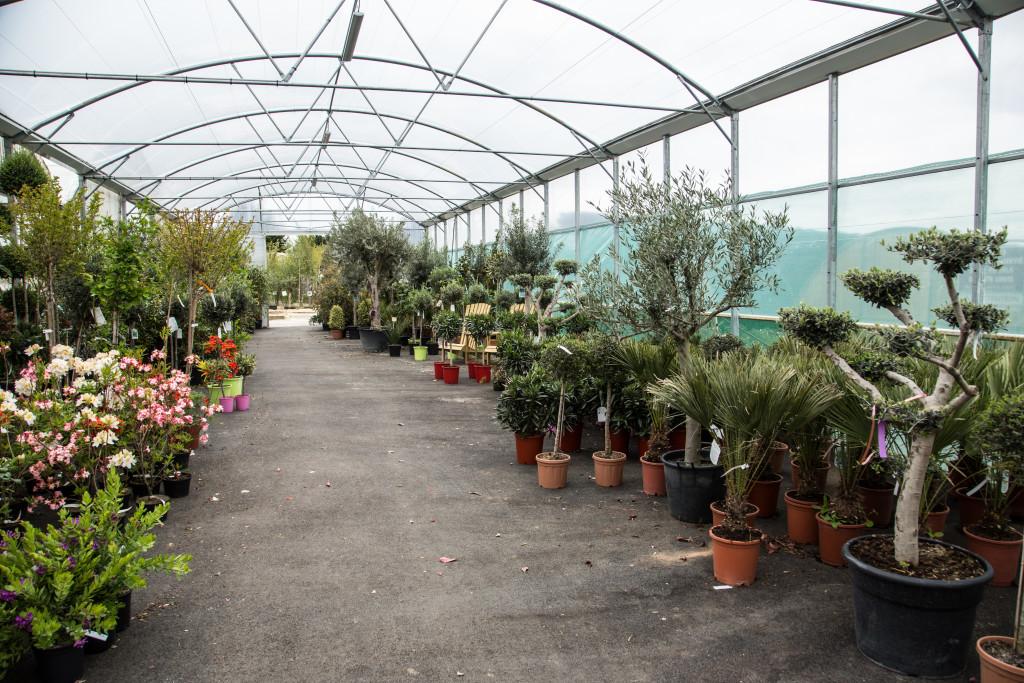 plantes mediterraneennes (4)
