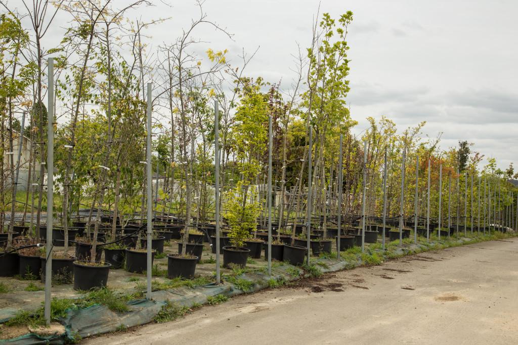 plateau arbre