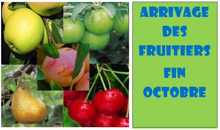 arrivage fruitiers